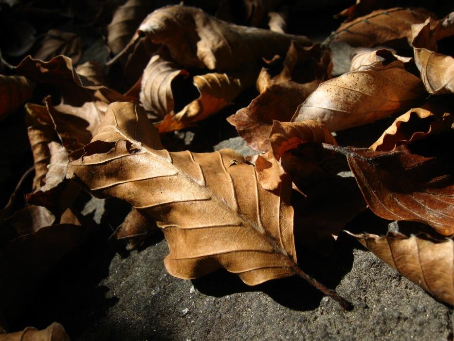 photoblog image Foglie, feuilles, leaves