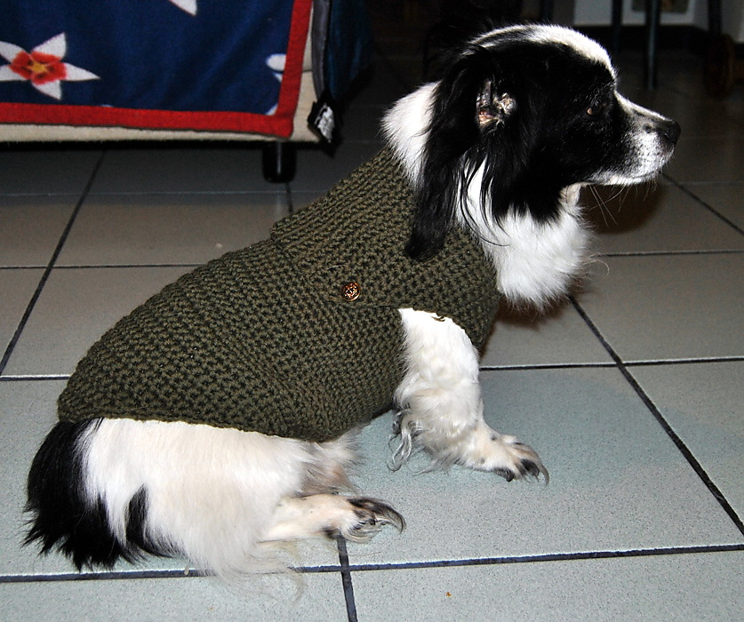 photoblog image Roky and the new coat (hand made)