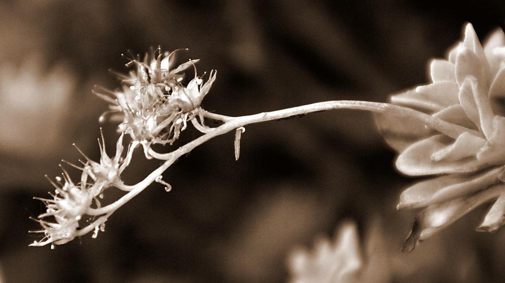 photoblog image dsc 0221.jpg