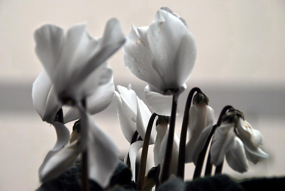 photoblog image Total w.